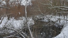 L'insenatura nell'acqua corrente dell'inverno della natura di legni, abbellisce il piccolo fiume nella neve Fotografia Stock Libera da Diritti