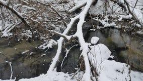L'insenatura nell'acqua corrente dell'inverno della natura di legni, piccolo fiume dentro abbellisce la neve Immagine Stock