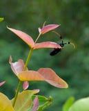 L'insetto nella stagione primaverile immagine stock libera da diritti
