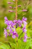 L'insetto raccoglie il nettare Fotografia Stock Libera da Diritti