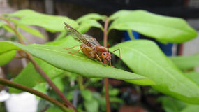 L'insetto si è appollaiato su una foglia Fotografia Stock Libera da Diritti