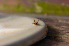 L'insetto si muove sul lavandino Immagine Stock Libera da Diritti