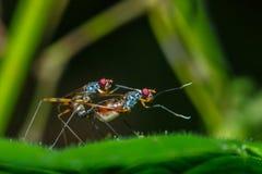 L'insetto sta crescendo sulle foglie, insetto, crescente Immagine Stock