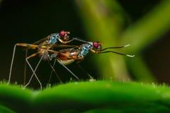L'insetto sta crescendo sulle foglie, insetto, crescente Immagine Stock Libera da Diritti