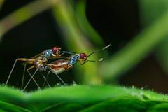 L'insetto sta crescendo sulle foglie, insetto, crescente Fotografia Stock