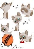 L'insieme completo dei gattini siamesi allegri illustrazione di stock