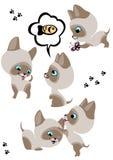 L'insieme completo dei gattini siamesi allegri royalty illustrazione gratis