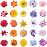 L'insieme dei fiori 5 colora 5 pezzi di ogni colore isolati su bianco Fotografia Stock Libera da Diritti