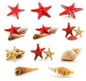 L'insieme dei Seashells (stelle marine e pettine) ha isolato Immagine Stock