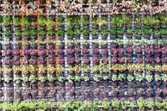 L'insieme dei vasi variopinti dei fiori mura il fondo Immagine Stock Libera da Diritti