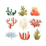 L'insieme dell'alga, piante marine subacquee variopinte vector le illustrazioni su un fondo bianco illustrazione vettoriale