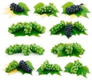 L'insieme dell'uva blu e verde matura ha isolato Fotografia Stock