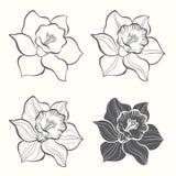 L'insieme della molla fiorisce il narciso isolato su fondo bianco H illustrazione di stock