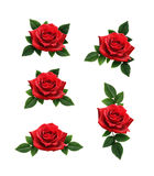 L'insieme della rosa rossa fiorisce le decorazioni Immagine Stock Libera da Diritti