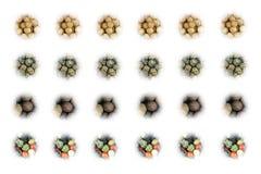L'insieme delle icone della spezia dei semi di coriandolo piccanti secchi ha messo dei peperoni del pimento su fondo bianco Fotografia Stock Libera da Diritti