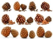 L'insieme delle noci ed i coni del pino siberiano hanno isolato Fotografia Stock