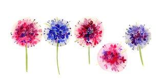 L'insieme di allium multicolore fiorisce su fondo bianco Immagine Stock