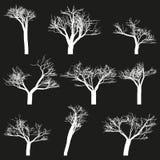 L'insieme di bianco descrive il fondo nero degli alberi Immagini Stock