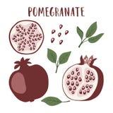 L'insieme di intera frutta del melograno, segmento, melograno semina e va illustrazione vettoriale
