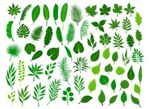 L'insieme di tropicale verde differente, la foresta, albero di Ollection del parco lascia il fogliame delle piante dei ramoscelli Fotografia Stock Libera da Diritti