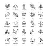 L'insieme lineare di vettore dell'analisi del vegano delle icone delle foglie utili degli elementi di progettazione copre di fogl illustrazione vettoriale
