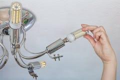 L'installation du maïs de LED s'allume dans un appareil d'éclairage de ménage Photo stock