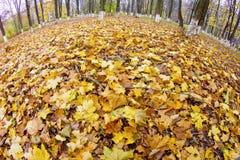 L'instantané de Fisheye de l'érable d'automne part dans le stationnement photos stock