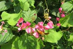 l'instruction-macro d'isolement par miel détaillé par abeille a empilé très le blanc Images libres de droits