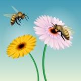 l'instruction-macro d'isolement par miel détaillé par abeille a empilé très le blanc illustration stock