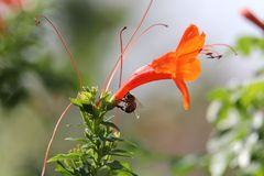 l'instruction-macro d'isolement par miel détaillé par abeille a empilé très le blanc Photos libres de droits
