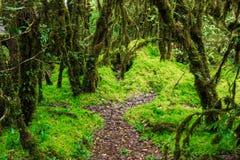 L'intégrité de la forêt Photo libre de droits
