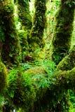 L'intégrité de la forêt Photos stock