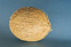 l'intera noce di cocco mette su un fondo blu scuro immagini stock