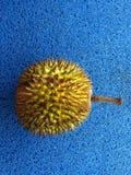 L'intero durian Spine dorsali dure e taglienti immagine stock libera da diritti