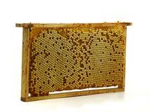 L'intero pettine dell'ape con il fuco eggs, nidiata isolata su fondo bianco Fotografie Stock Libere da Diritti