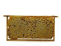 L'intero pettine dell'ape con il fuco eggs, nidiata isolata su fondo bianco, vista frontale Fotografia Stock Libera da Diritti