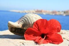 L'interpréteur de commandes interactif d'escargot d'eau et les ketmies rouges fleurissent la Grèce Photographie stock libre de droits