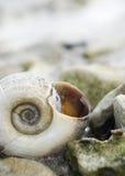 L'interpréteur de commandes interactif de l'escargot. Photographie stock