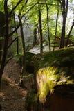 L'intrico ha coperto le rocce in foresta fotografia stock