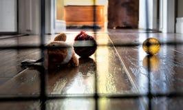 À l'intérieur d'une cage Photographie stock libre de droits