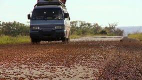 L'invasione delle locuste nel Madagascar Milioni di cavallette durante la migrazione sono stati schiacciati sulla strada immagini stock