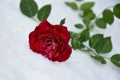 L'inverno è aumentato Fotografie Stock Libere da Diritti