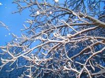 L'inverno è venuto Fotografie Stock Libere da Diritti
