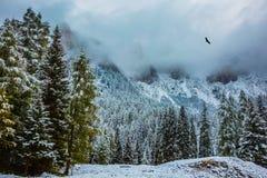 L'inverno è venuto Fotografia Stock