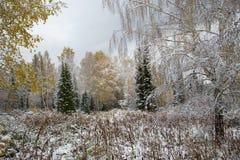 L'inverno è venuto a Altai fotografie stock