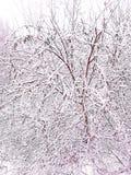 L'inverno è venuto, la prima neve è caduto sul primo giorno di dicembre immagini stock libere da diritti