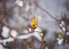 L'inverno è venuto Rami nella neve e l'autunno scorso nelle foglie Fotografie Stock Libere da Diritti