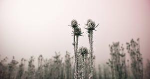 L'inverno comning Fotografie Stock Libere da Diritti
