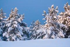 L'inverno in foresta Fotografie Stock