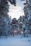 L'inverno in foresta Immagine Stock Libera da Diritti